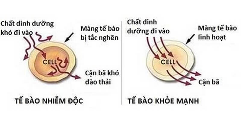 uong-tra-duong-co-map-khong-2