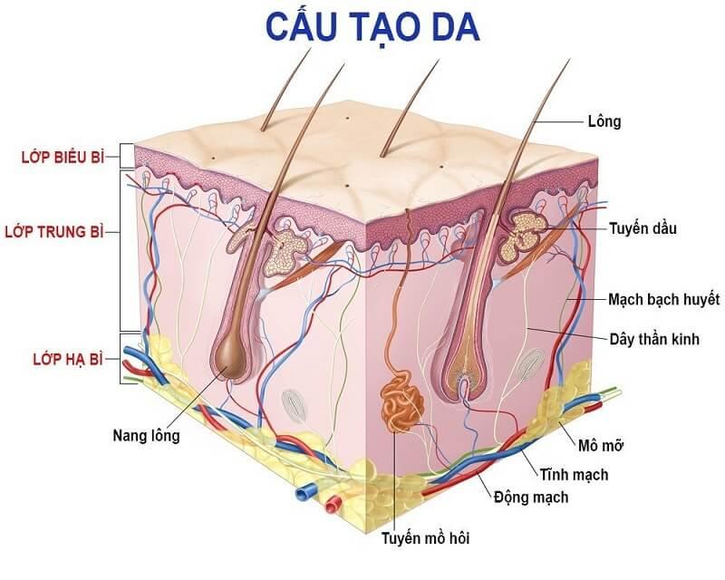 collagen-tai-tao-da-2