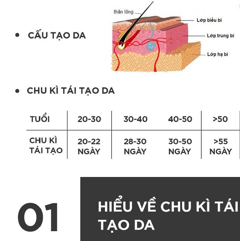 chu-ky-tai-tao-da-1